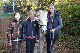 Bild Pferd Harlekin
