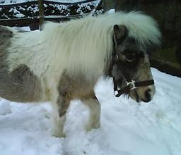 Bild Pferd Hexe