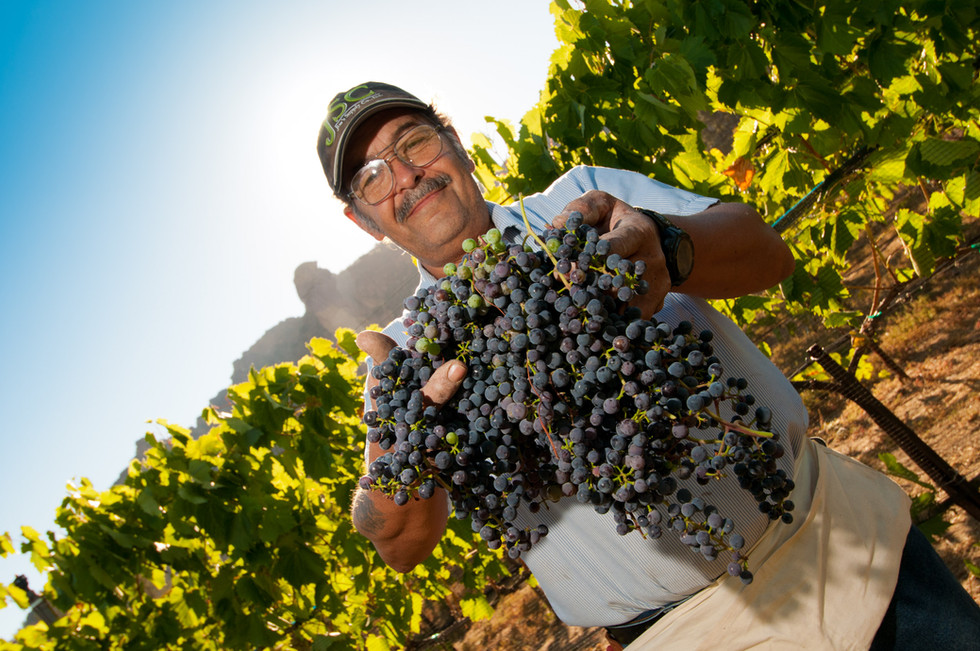 harvest-worker-shows-fruit.jpg