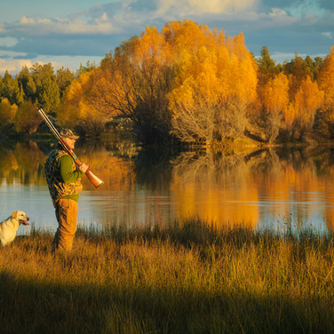 A hunter and his dogs work to hunt pheasants in the Central Oregon high desert.