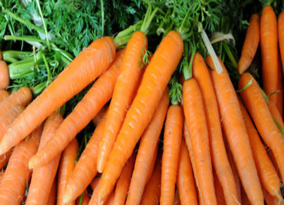 Carrot ooty