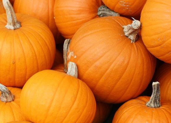 Pumpkin(Disco)
