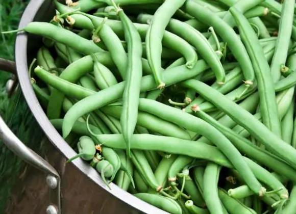 Beans(Naati)