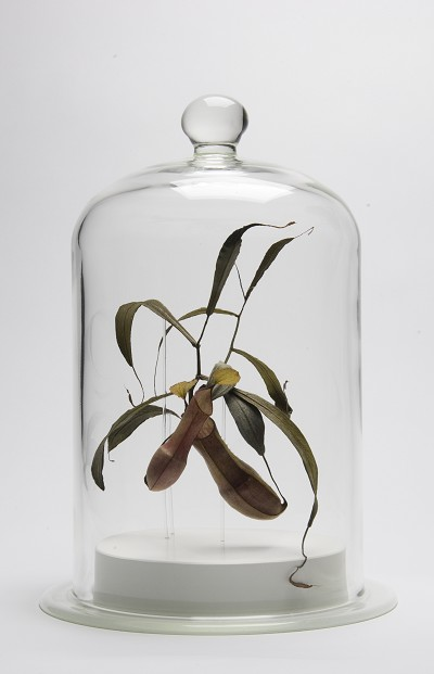 Gateway Plant Specimens_003.jpg
