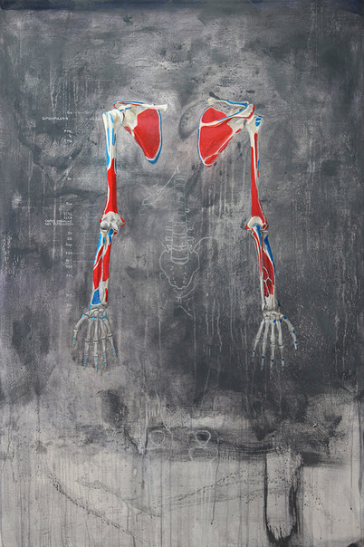 Skelett obere Extremität