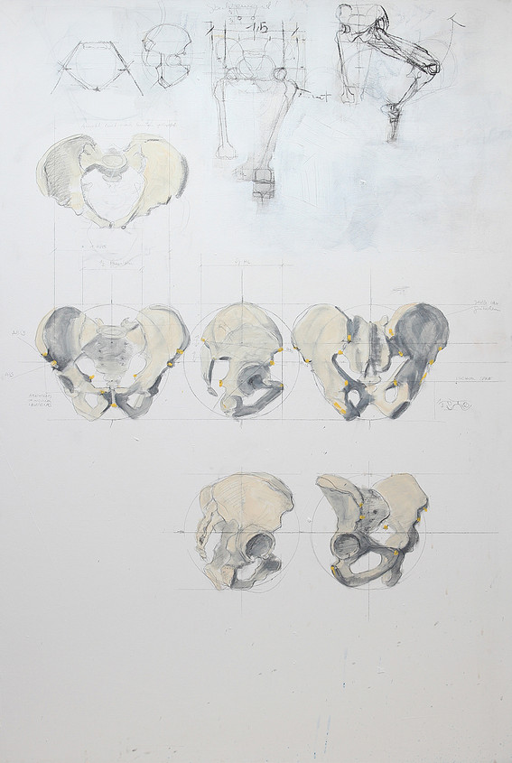 Skelett Becken