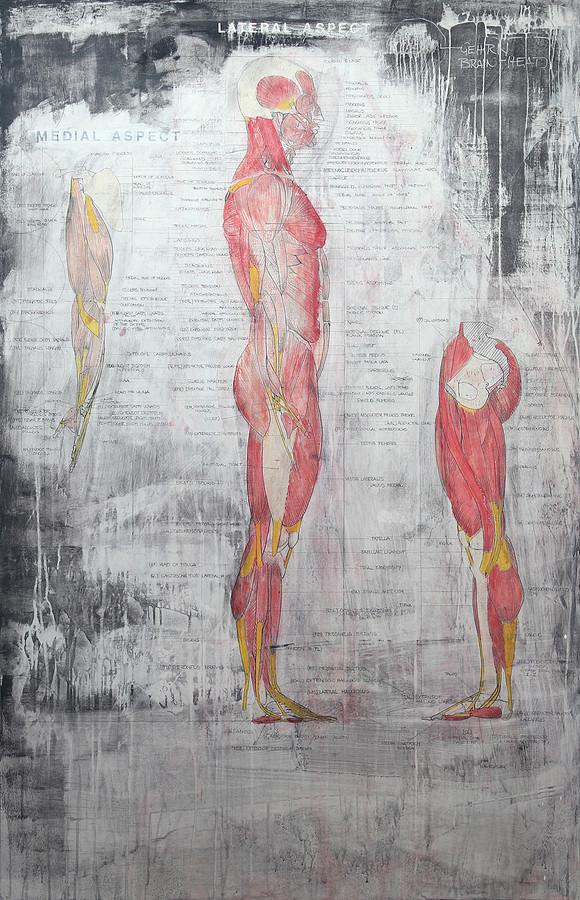 Muskulatur Gesamtkörper