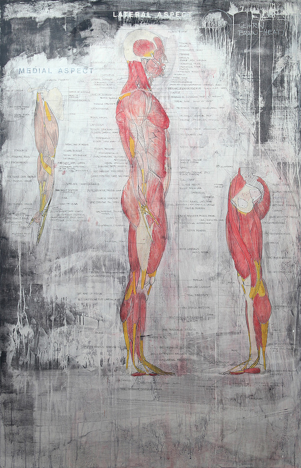 Muscles of Whole Body