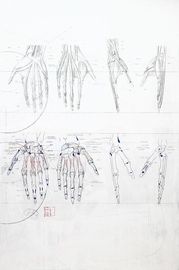 Muskulatur Hände