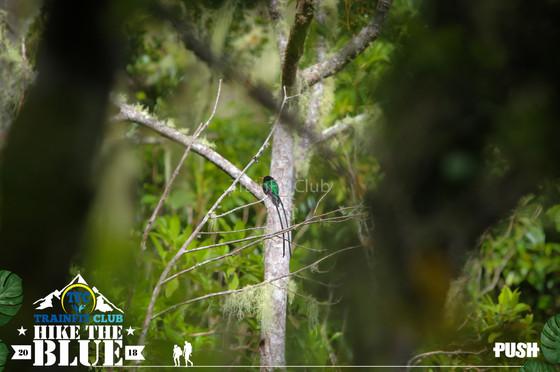 20180512-HiketheBlue-240.jpg