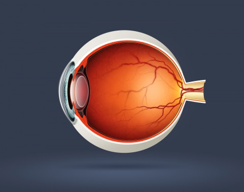 Fascinating Facts About The Eye: Part 2: