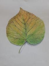 Herfstblad Linde