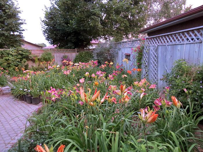 Backyard ablaze in colour
