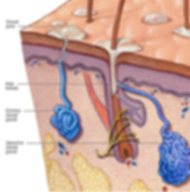 Causes and Skin Structure at the Canadian Plastic Surgery Centre