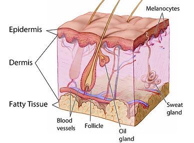 Skin Cancer Rapid Access Skin Cancer