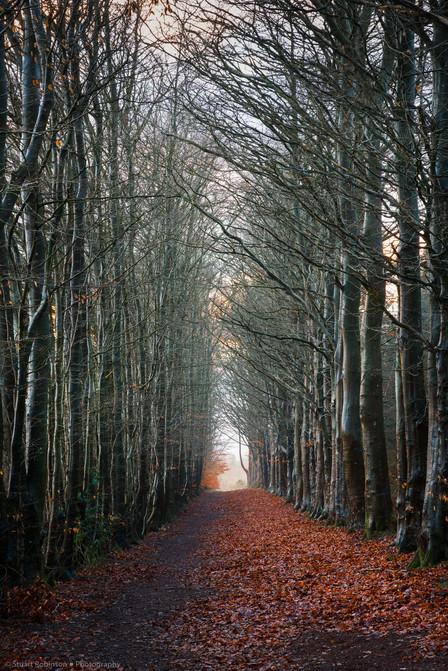 Clocaenog Forest, North Wales