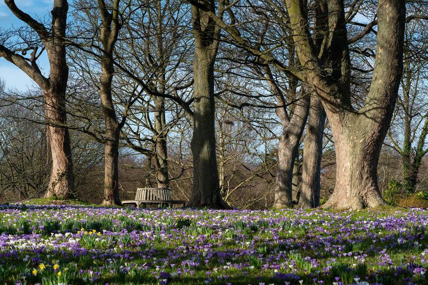 Ness Botanic Gardens in Spring