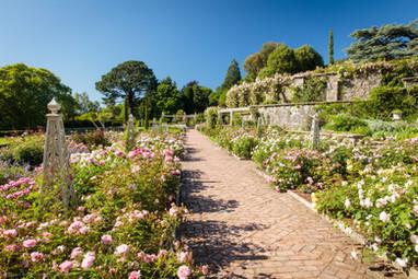 Rose Terraces, Bodnant Garden