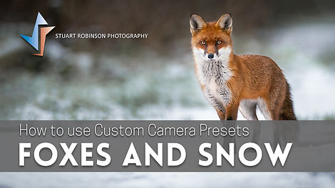 Custom Presets and Foxes in the Snow