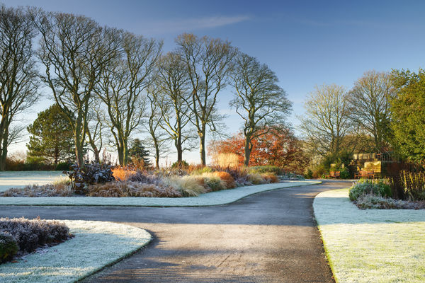 Ness Botanic Gardens in Winter