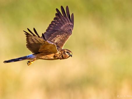 Faites comme l'oiseau! Prenez votre envol vers une nouvelle destination pour atteindre vos objectifs