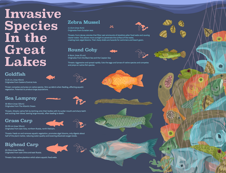 Invasive Species in the Great Lakes