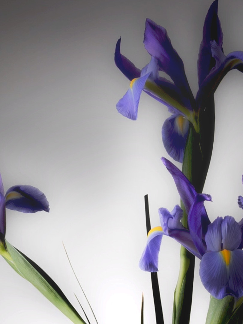 Irises Grow In My Field