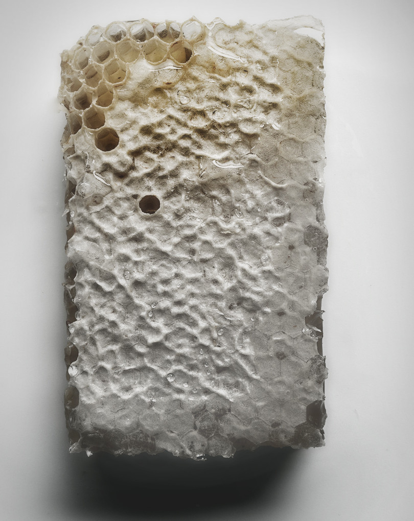 Honey comb for 'Why'.