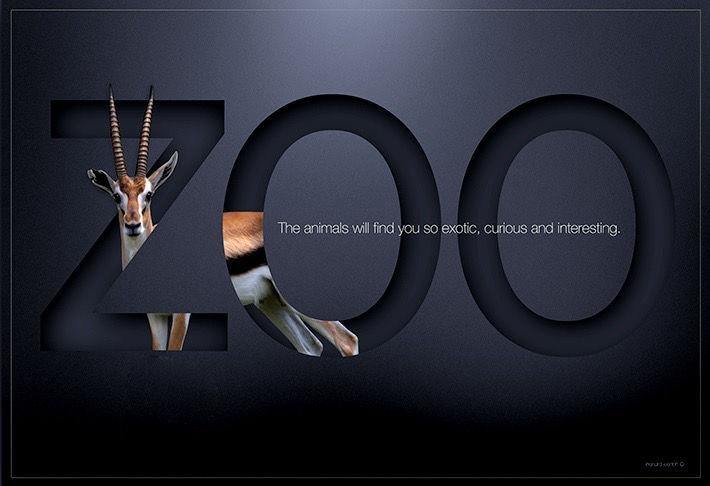 Zoo-mock-up-antelope710_edited.jpg