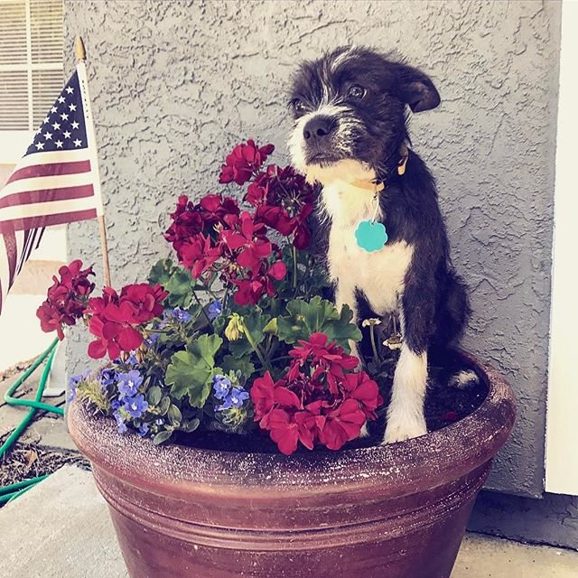 Welcoming Oscar to our Turf Tailor crew! #turftailors #turfpup #flowers #lawncare #lawnmaintenance #
