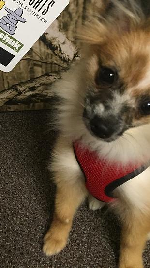 HOWLING DOG Mini Harness