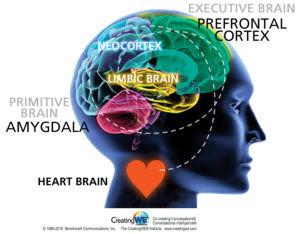 C-IQ-for-Coaches-_-Primitive-Executive-Brains-_-Image.jpg