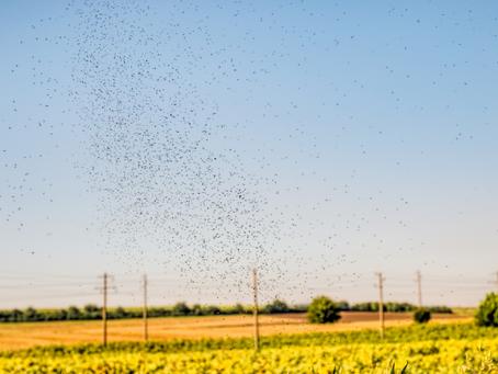 The danger in swatting flies