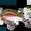 Rainbow Trout (RT)