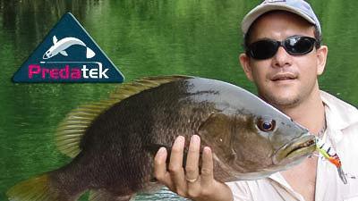 A New Britan black bass that took a Predatek S85 Spoonbill fishing lure in Kakadu Tiger (KT) colours