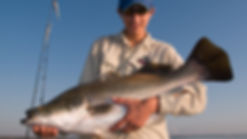 Matt Smith trolled this trophy barramundi at Lake Awoonga on a Predatek Viper
