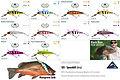 Predatek S85 Spoonbill fishing lure colours