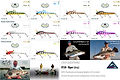 Predatek V150 Viper barramundi fishing lure colours