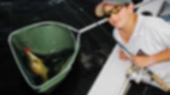 Ben Smith caught a golden perch at Lake Copeton on a Predatek B65D Boomerang fishing lure