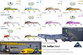 Predatek S150 Sandviper barramundi fishing lure colours