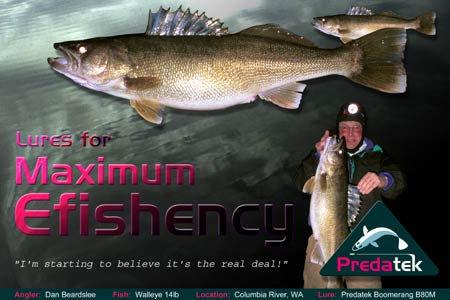 Dan Beardslee (Washington State USA) catches walleye on an Australian Predatek B80M Boomerang fishing lure