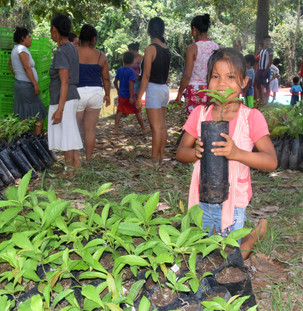 Growing forests for the future