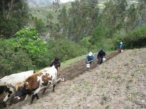 Using ancestral farming styles