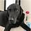 Thumbnail: Animal Reiki Gift Voucher