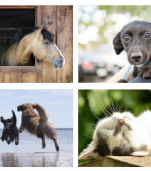 Distance Reiki For Animals