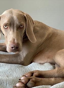Animal Reiki Treatment (Large + £10)