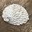 Thumbnail: Abalone Shell