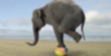 Life Balance Fitness UK shows Elephant balancing on a ball