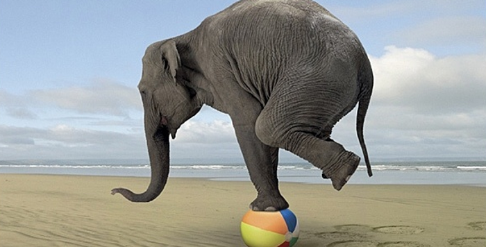 Life Balance Fitness UK shows Elephant balancing on a ball