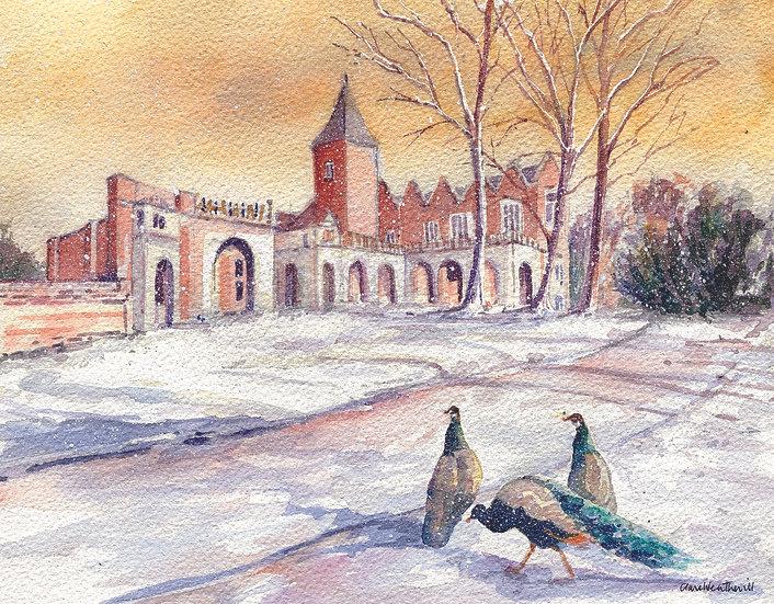 HO15 Holland House with Peacocks